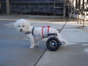 Happy In His Cart