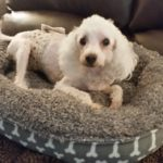 Buddy in a bed donated to HWAH by Van Ness Pet Products