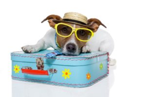 Dog On Vacation