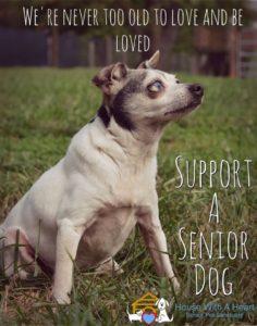 Support a senior dog clementine
