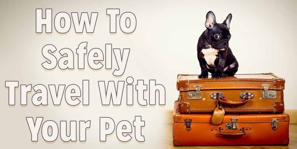 safely-travel-with-pet