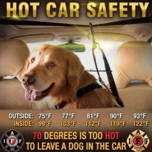 Hot Car Hot Dog