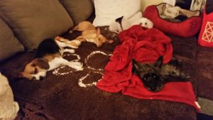DogsSleeping