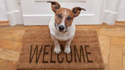 welcome-dog