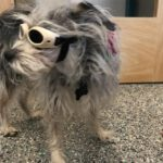 "Lady ""Doggles"" May2018"