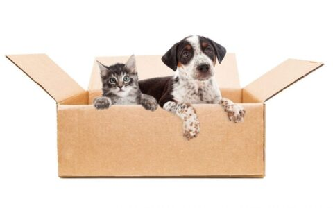 Donations of Pet Supplies